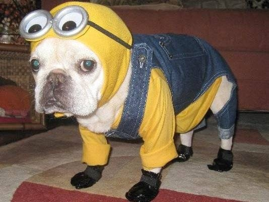 100-silliest-pet-halloween-costumes-large-msg-134764278367
