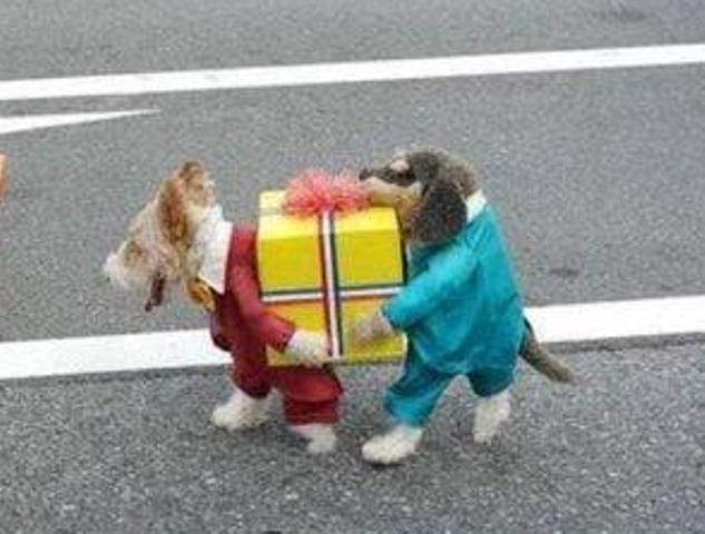 Dogs-Carrying-Box