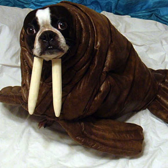 ... Khloe-Kardashian-Dog-Costumes ... & funny dog costumes Archives - Fit Lizzio Fitness Blog
