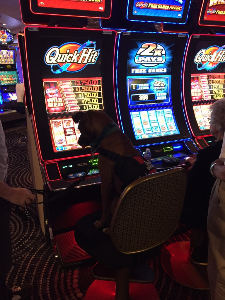 dog gambling
